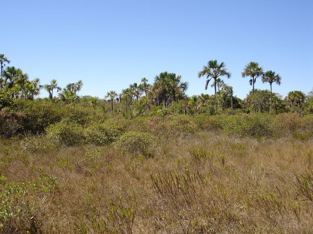 Cerrado brasileiro. Foto: Vitor 1234 [CC-BY-SA-3.0 (http://creativecommons.org/licenses/by-sa/3.0) or GFDL (http://www.gnu.org/copyleft/fdl.html)], via Wikimedia Commons