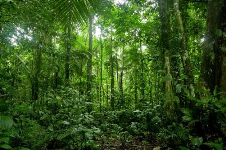 Floresta equatorial. Foto: Pablo Hidalgo / Shutterstock.com