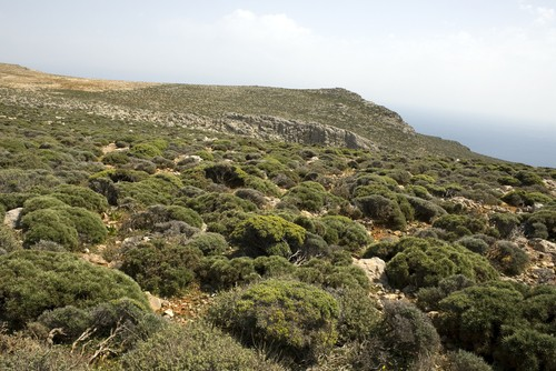 Maquis em floresta mediterrânea. Foto: baldovina / Shutterstock.com