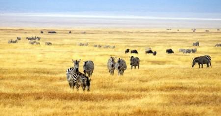 Foto: Chantal de Bruijne / Shutterstock.com