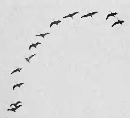 Aves. Foto: H. K. Job [Public domain], via Wikimedia Commons