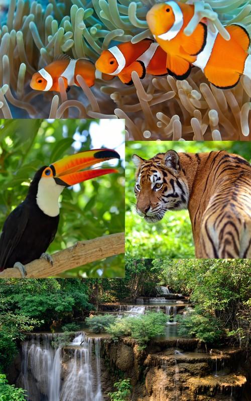 A biodiversidade da natureza.