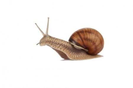Os caramujos e caracóis são representantes dos moluscos. Foto: Syomao / Shutterstock.com