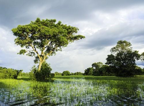 Pantanal brasileiro. Foto: Filipe Frazão / Shutterstock.com
