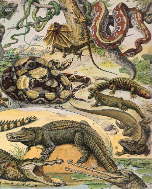 Representantes dos Répteis. Ilustração: Adolphe Millot [Public domain], via Wikimedia Commons