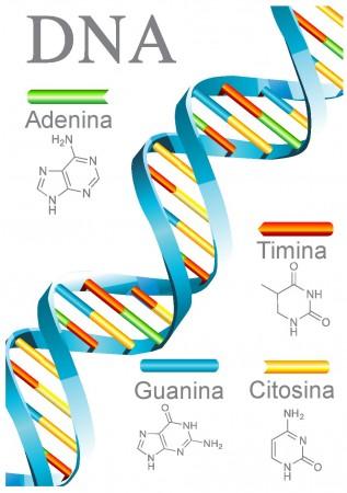 Estrutura do DNA (clique para ampliar) Ilustração: Webspark / Shutterstock.com