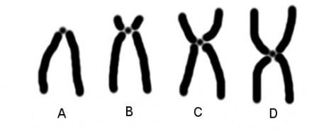 estrutura-cromossomo
