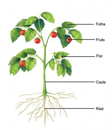 Estrutura das angiospermas. Ilustração: BlueRingMedia / Shutterstock.com