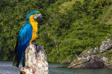 Arara azul e amarela. Foto: Filipe Frazão / Shutterstock.com