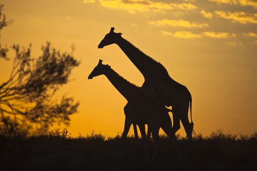 Foto: Andrew M. Allport / Shutterstock.com