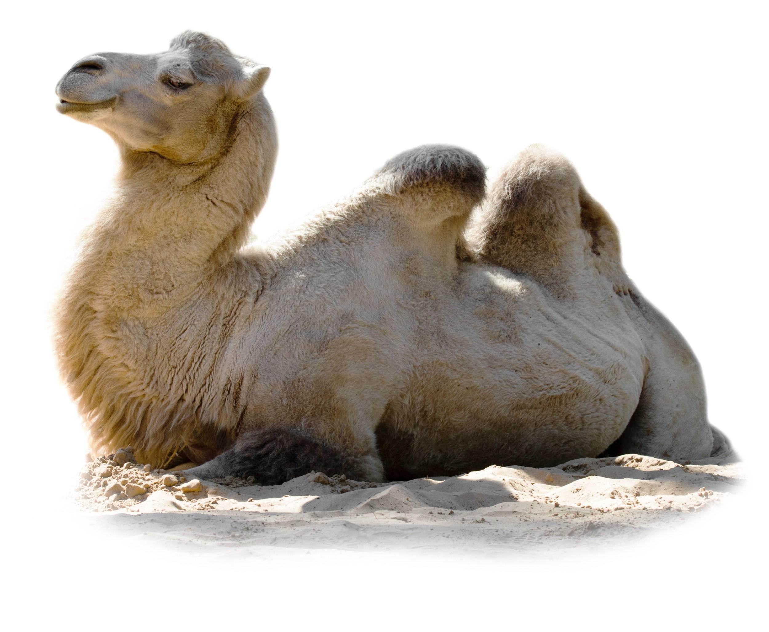 Pata de camelo no trem - 1 part 5