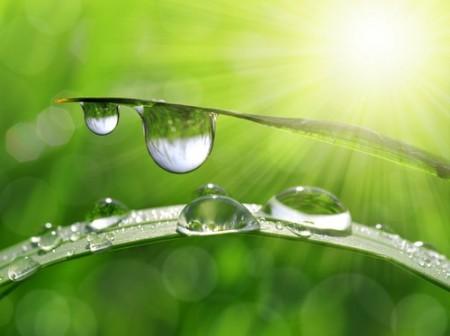 Coesão da Água. Foto: jaroslava V / Shutterstock.com