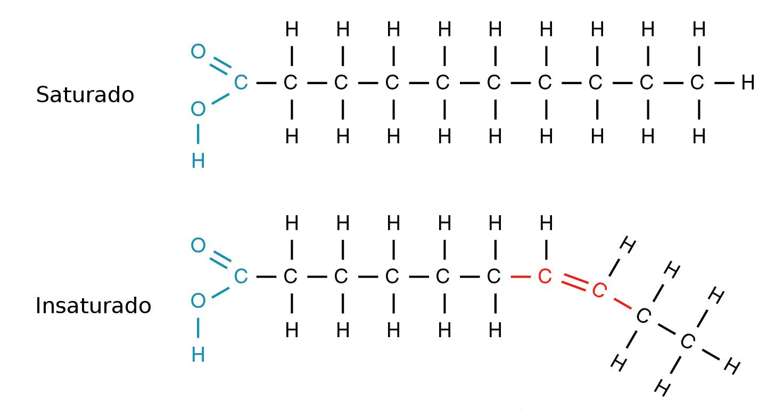 Lipídios Tipos Classificação Funções Bioquímica