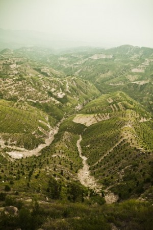 Área reflorestada. Foto: XiXinXing / Shutterstock.com