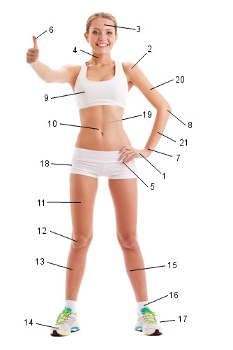 Partes do corpo humano. Foto: Pindyurin Vasily / Shutterstock.com