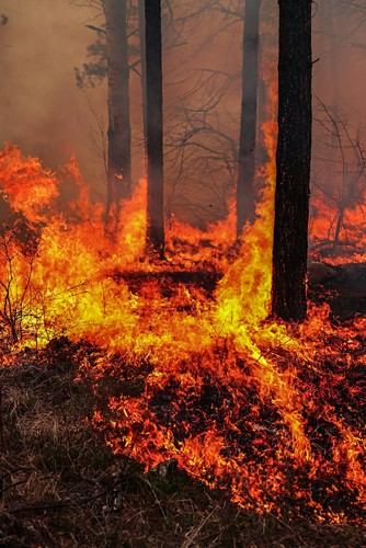 Foto de um incêndio florestal.