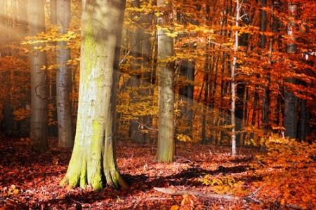 As folhas das árvores caem no outono. Foto: Sunny Forest / Shutterstock.com