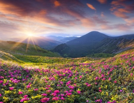 Foto: Mayovskyy Andrew / Shutterstock.com