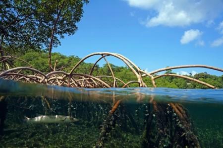 Raízes aquáticas. Foto: Vilainecrevette / Shutterstock.com