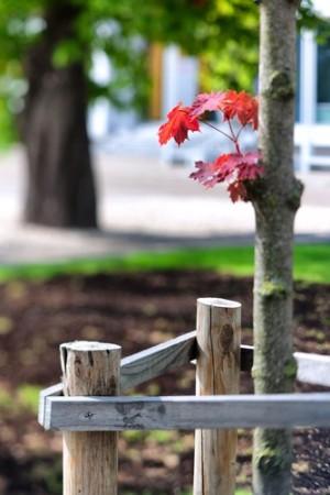 Foto: Victor Grow / Shutterstock.com