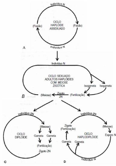 ciclo-reproducao-protozoa