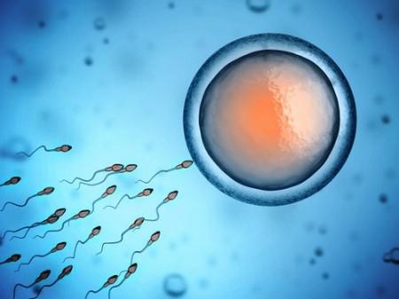 Espermatozoide fecundando o óvulo. Ilustração: koya979 / Shutterstock.com