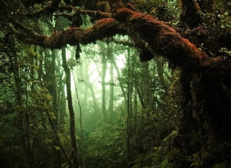 Floresta tropical úmida. Foto: Eky Studio / Shutterstock.com