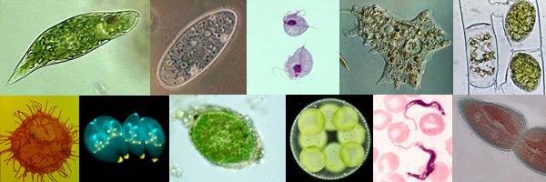 protozoarios-diversidade