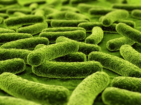 Bactérias. (Ilustração: © iStock.com / zentilia)