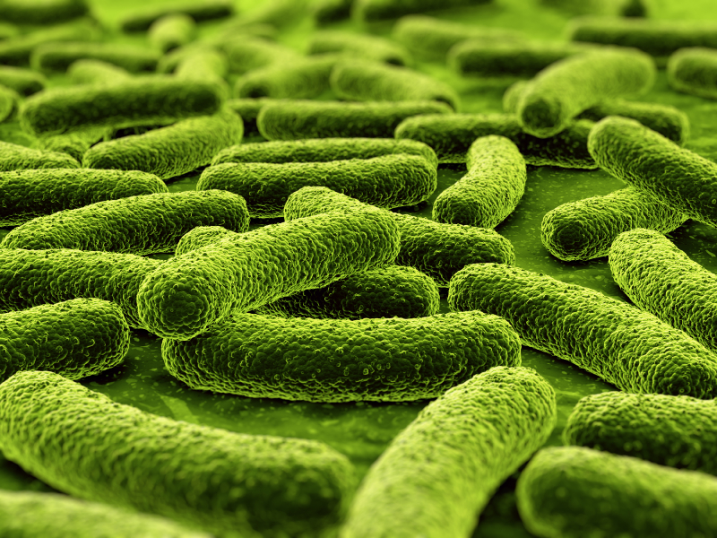 Bactérias ilustração istock com zentilia