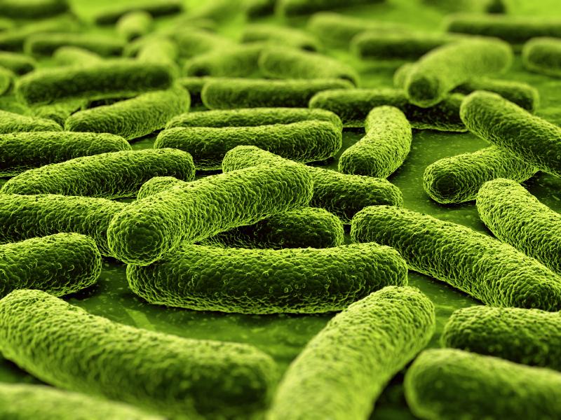 Estrutura Celular Das Bactérias Reino Monera Infoescola
