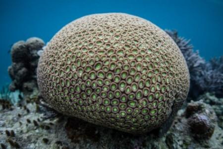 Colônia de corais. Foto: Ethan Daniels / Shutterstock.com