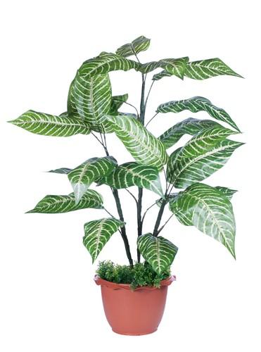 Plantas Venenosas  Verde em Folha