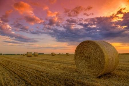 Feno. Foto: Fesus Robert / Shutterstock.com