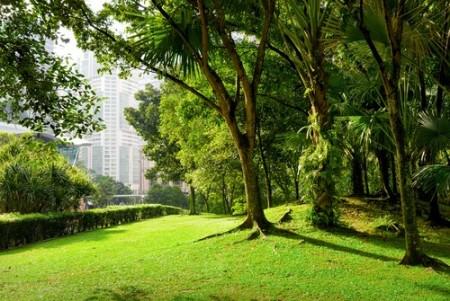 Área verde em grande centro urbano. Foto: Efired / Shutterstock.com