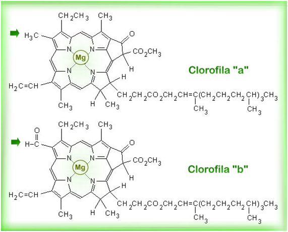 clorofila a b