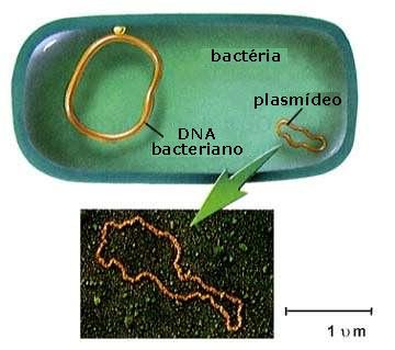 plasmideo