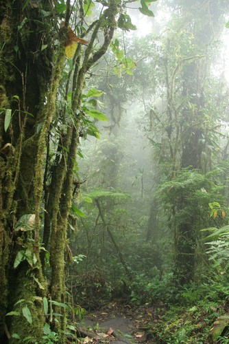 Floresta Nublada. Foto: Brian Lasenby / Shutterstock.com