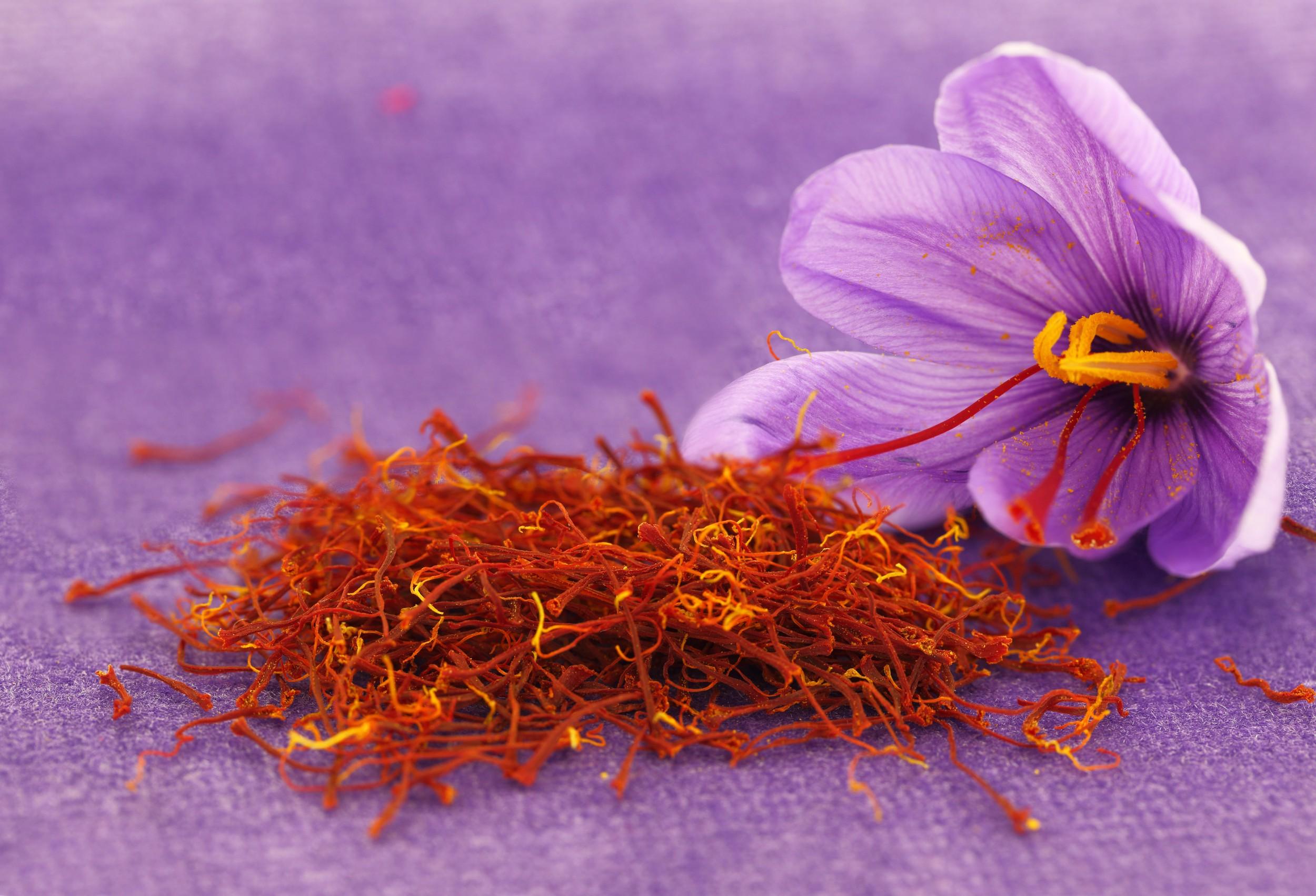Resultado de imagem para flor de zafferano