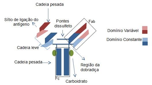 Ilustração: Isabela Canhas / InfoEscola.com