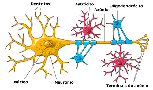 neuroglial cells coloring pages - photo#14