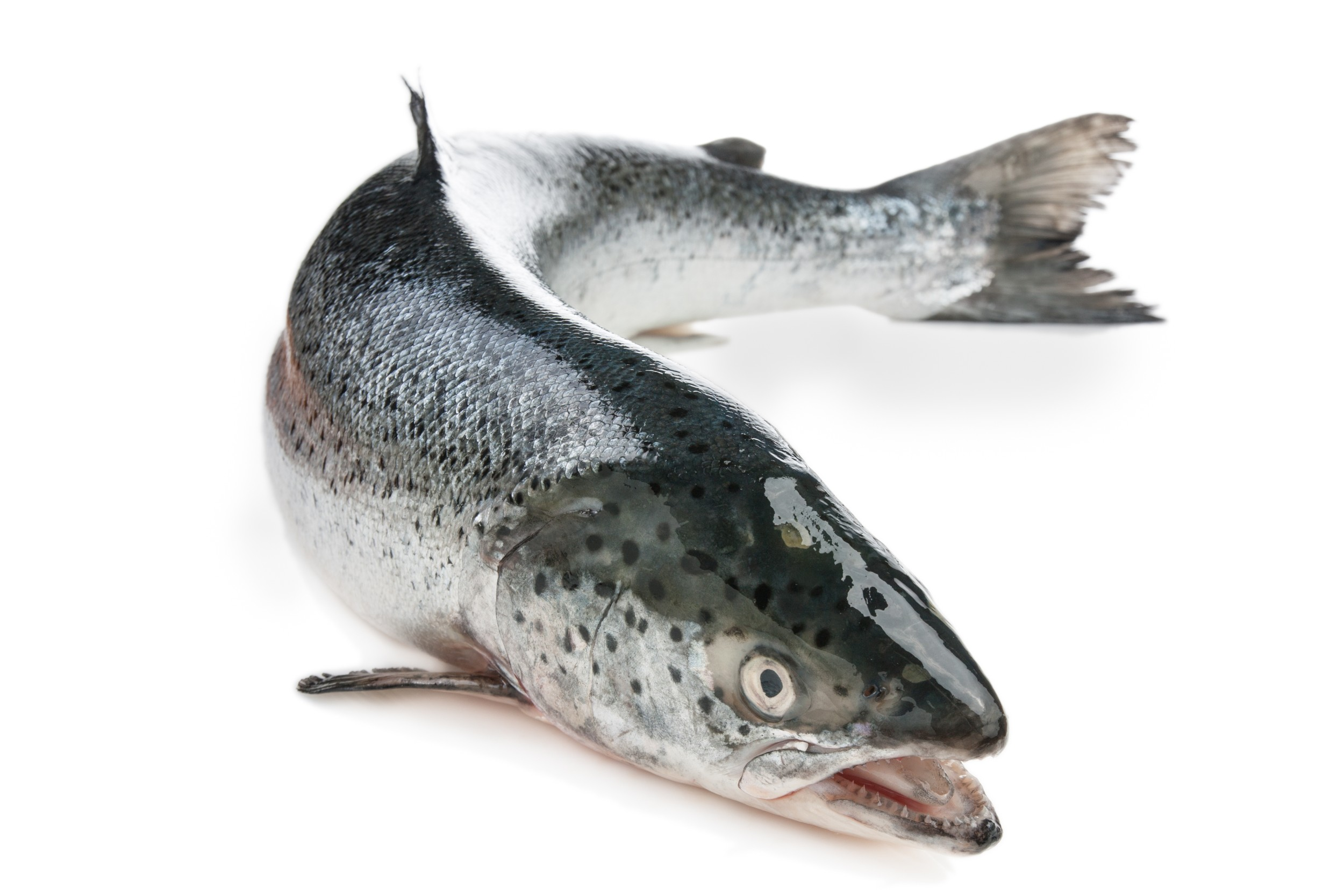 singles in salmon Save at least 10% on all purchases all year it's easy - just sign up to our free monthly newsletter get up to date information on fliesonline promotions and fishing.