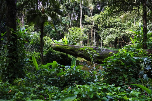 Mata Atlântica, exemplo de Floresta Ombrófila Densa. Foto: Luiz Rocha / Shutterstock.com