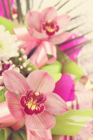 Orquídeas. Foto: Malivan Iuliia / Shutterstock.com