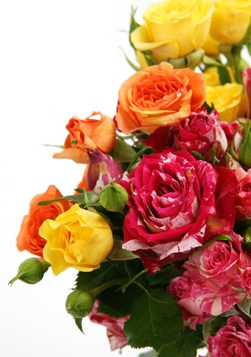 Rosas. Foto: Elena Itsenko / Shutterstock.com