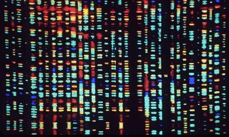 Genoma Gen 233 Tica E Biologia Infoescola