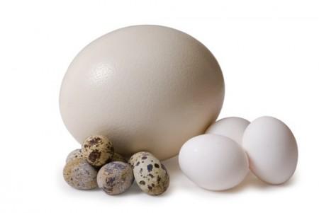 Ovos de diversos tamanhos: aveztruz, galinha e codorna. Foto: nik7ch / Shutterstock.com
