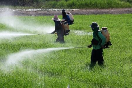 Agricultores aplicando agrotóxicos em plantação. Foto: sakhorn / Shutterstock.com