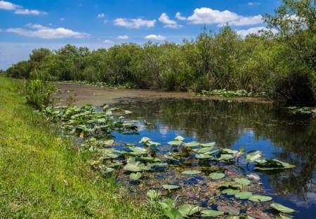 Brejo localizado na Flórida, EUA. Foto: Andy Lidstone / Shutterstock.com