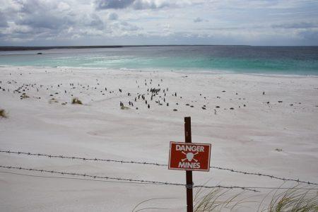 Campo minado na baía de Yorke, Ilhas Falklands. Foto: JeremyRichards / Shutterstock.com